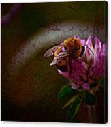 Bumble Bee Tattered Wings Art 3 Canvas Print