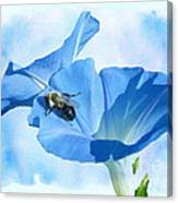 Bumblebee And Blue Morning Glory Canvas Print