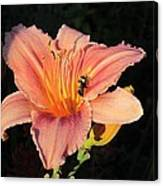 Bumblebee On Daylily Canvas Print
