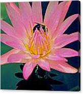 Bumblebee On Water Lily Canvas Print