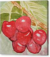 Bunch Of Red Cherries Canvas Print