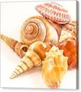 Bunch Of Shells Canvas Print