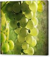 Bunch Of Yellow Grapes Canvas Print