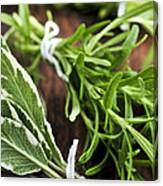 Bunches Of Fresh Herbs Canvas Print
