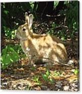 Bunny In The Wild 2 Canvas Print