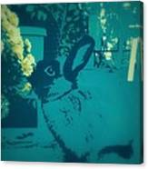 Bunny Poster Canvas Print