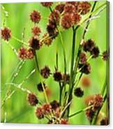 Bur-reed Canvas Print