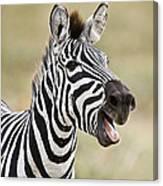 Burchells Zebra Equus Quagga Burchellii Canvas Print