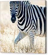 Burchells Zebra Equus Quagga Canvas Print