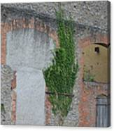 Window With Ivy Canvas Print
