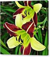 Burgundy And Yellow Lilies 2 Canvas Print