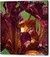 Burgundy Blossom Canvas Print