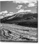 Burke Behind The Fence Canvas Print