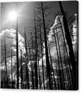 Burn Forest Canvas Print