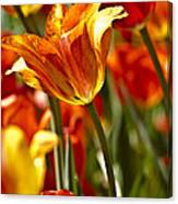 Tulips-flowers-tulips Burning Canvas Print
