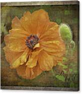 Burnished Poppy Canvas Print