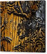 Burnt Beetle Maze  #9991 Canvas Print
