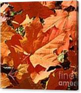 Burnt Orange Canvas Print