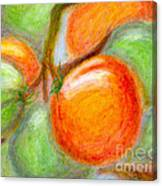 Burpee Tomatoes Canvas Print