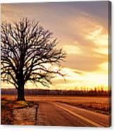Burr Oak Silhouette Canvas Print