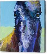 Burro Stare Canvas Print