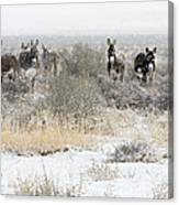 Burros In The Snow Canvas Print