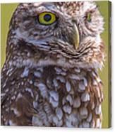 Burrowing Owl 001 Canvas Print