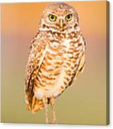 Burrowing Owl II Canvas Print