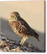 Burrowing Owl II Canvas Print