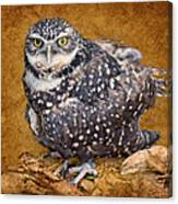Burrowing Owl Portrait Canvas Print