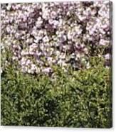 Bush With The Background In Cherry Klarenbeek Park In Arnhem Netherlands Canvas Print