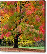 Busse Woods Fall Color Canvas Print