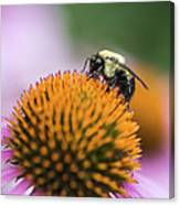 Busy Bee On Cone Flower Canvas Print