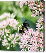 Busy Bumble Bee Canvas Print