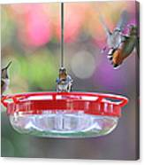 Busy Day At The Feeder Canvas Print