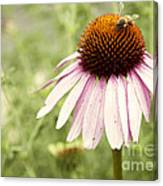 Busy Little Bee Canvas Print
