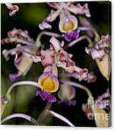 Busy Orchids Canvas Print