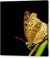 Buterfly Canvas Print