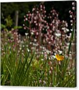 Buttercup And Wildflowers Canvas Print