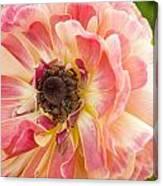 Buttercup Blossom Canvas Print
