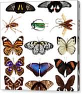 Butterflies And Beetles Canvas Print