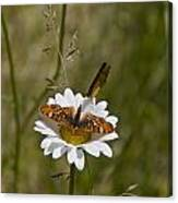 Butterflies And Daisy In A Yosemite Meadow Canvas Print