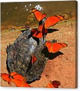 Butterflies And Turtle Canvas Print
