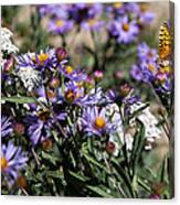 Butterflies And Wildflowers Canvas Print