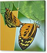 Butterflies Mating Out Of Bounds Canvas Print