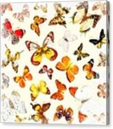 Butterflies Square Canvas Print