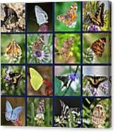 Butterflies Squares Collage Canvas Print