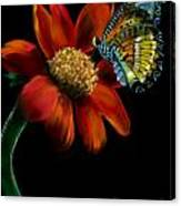 Butterfliy Canvas Print