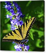 Butterflly Bush And The Swallowtail Canvas Print