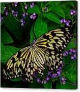 Butterfly - Yellow Green Purple Canvas Print